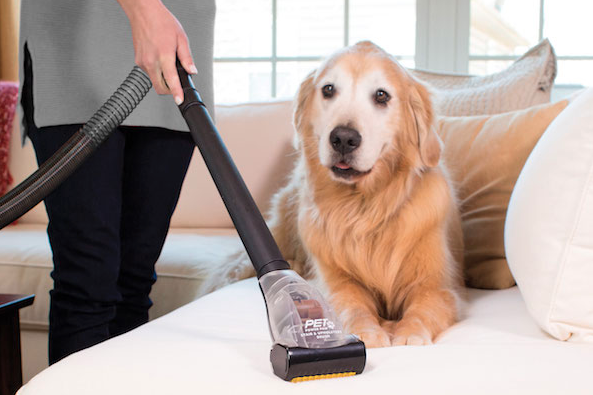 tips cleaning dog hair
